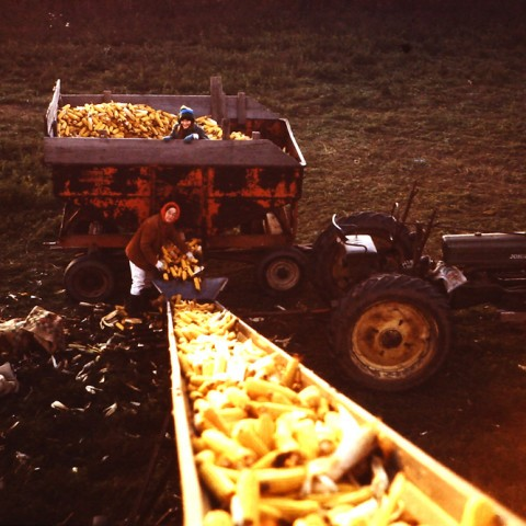 1970's Eleanor Roadhouse with Susan in the wagon loading the field corncrib