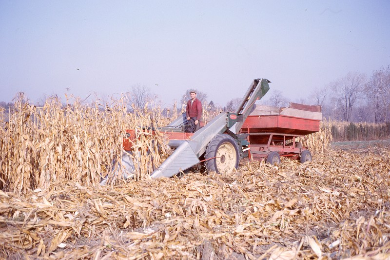 Uncle Stanley running the two-row corn picker, 1963-64